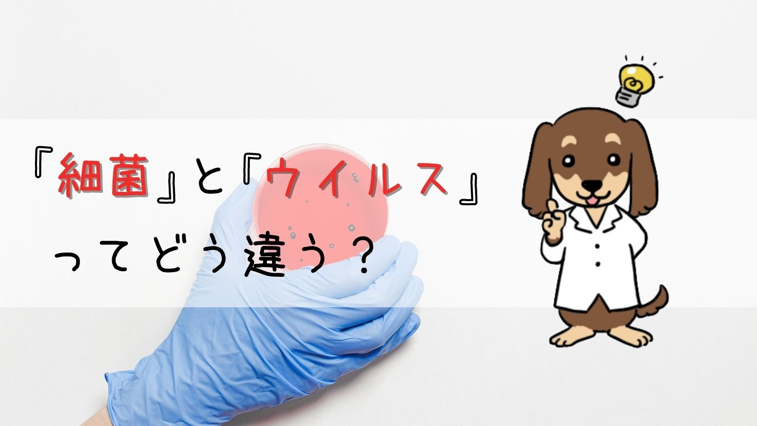 細菌とウイルスのアイキャッチ画像